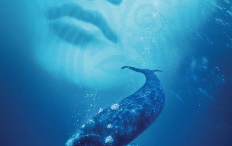 Whale-y bad movie is misunderstood by viewers