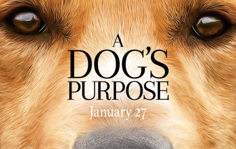 A Dog's Purpose gets the cone of shame