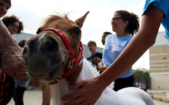 Miniature horses photo gallery