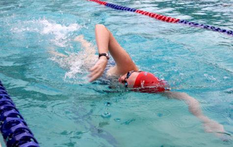 Sophomore Hayden Shantz makes her way across the pool, pracinting her freestyle.