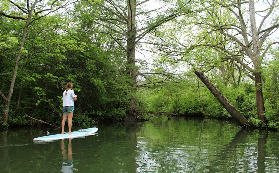 Austin resident Baylie Beebe paddleboards through the cove of Commons Ford Ranch on Lake Austin April 6.